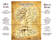 Tree of Life Explained